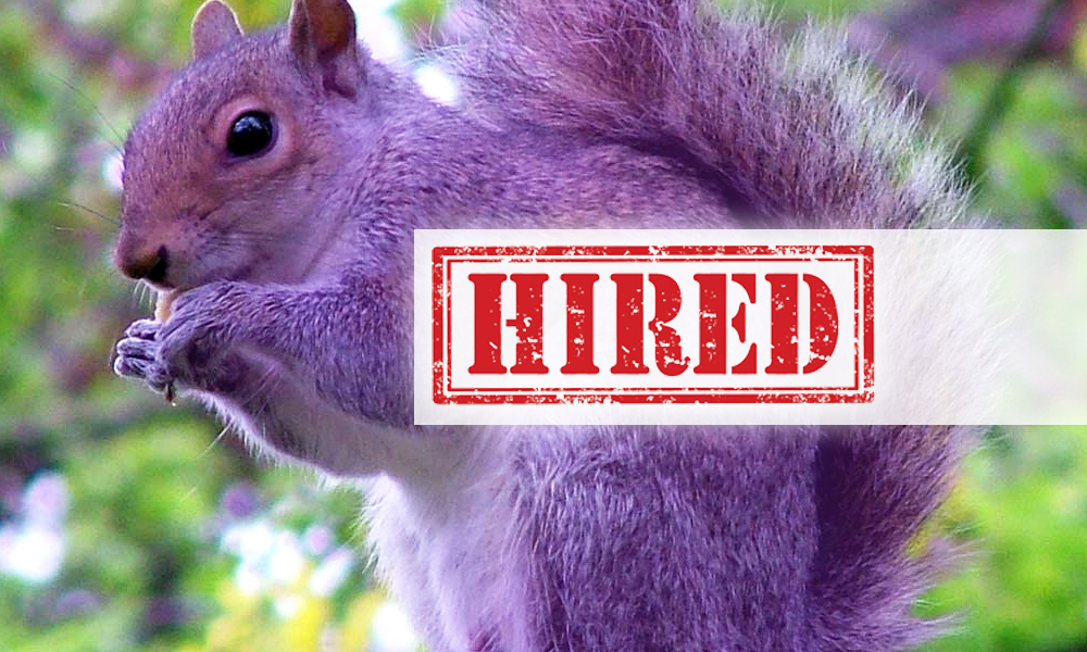 Hunting The Purple Squirrels Team Resumepro